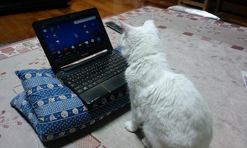 パソコンが好きな猫